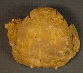 Linoproductus prattenianus