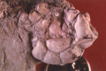 Glaukosocrinus