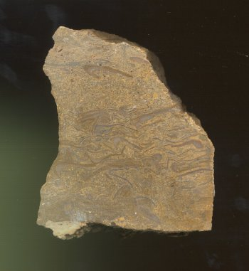 Phylloid Algae from the Reading Limestone member, Emporia Formation, Pawnee County