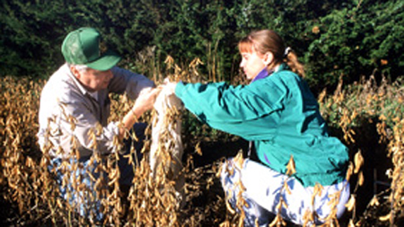 Forester Jim Brandle and student experiment with the effects of windbreaks on soybeans.