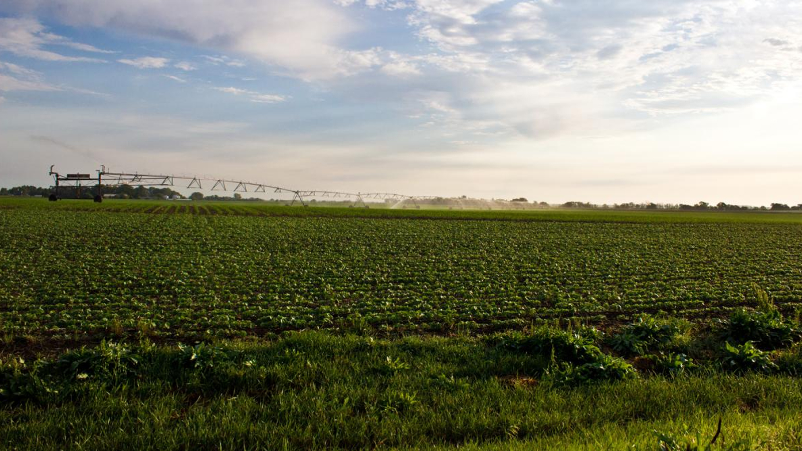 Six University of Nebraska researchers, including SNR's Mark Burbach, will join colleagues from three other institutions to develop a model for engaging communities and stakeholders to ensure adequate supplies of good-quality water both for and from agriculture.