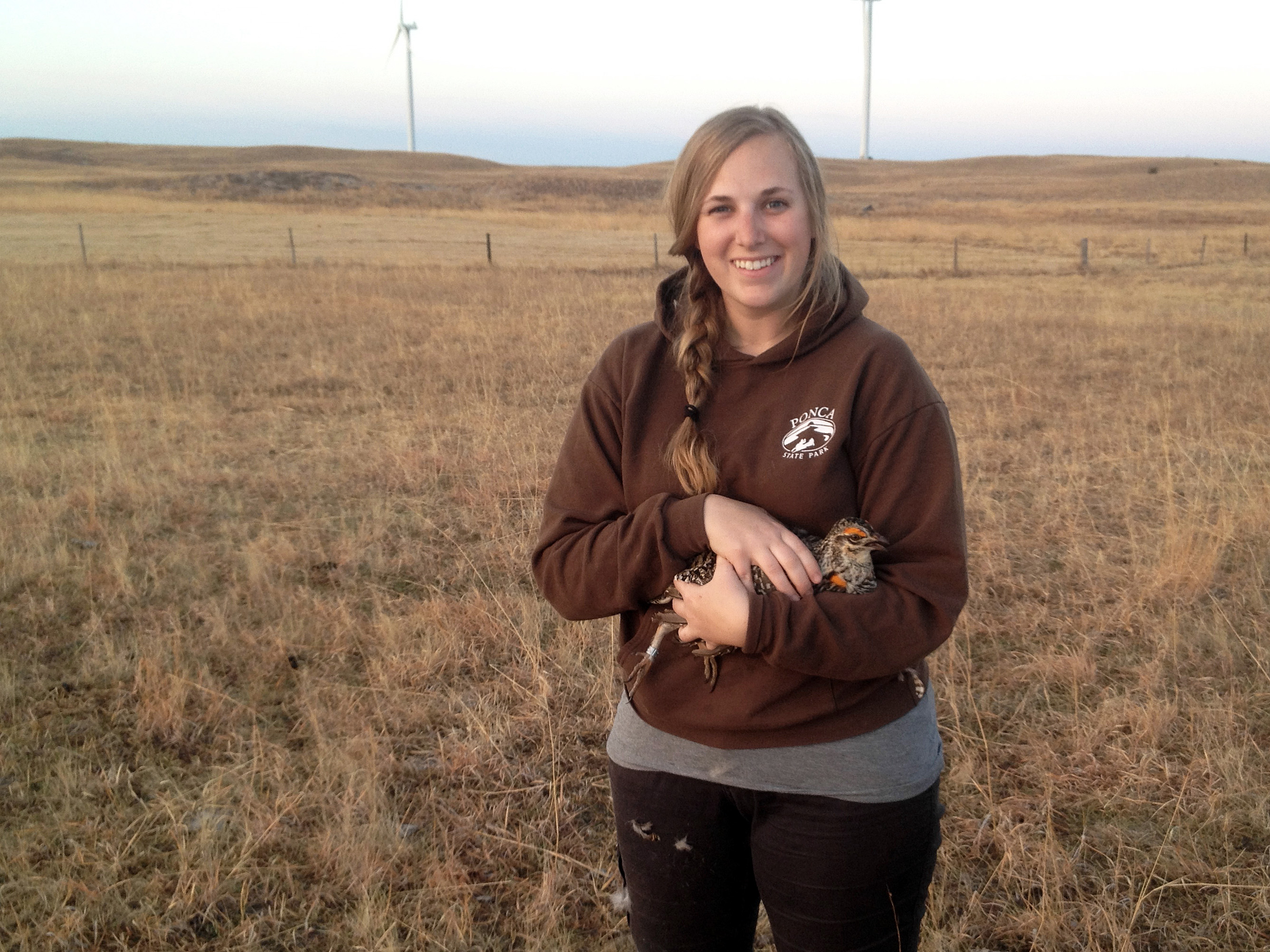 Rapid development of wind energy across the Great Plains has spurred concern about potential effects on grassland birds, the most rapidly declining avian group in North American. But a new study by University of Nebraska-Lincoln researchers shows that at least one grassland bird &mdash; the endangered greater prairie-chicken &mdash; pays little attention to small-scale wind energy infrastructure in choosing nesting sites.</p>