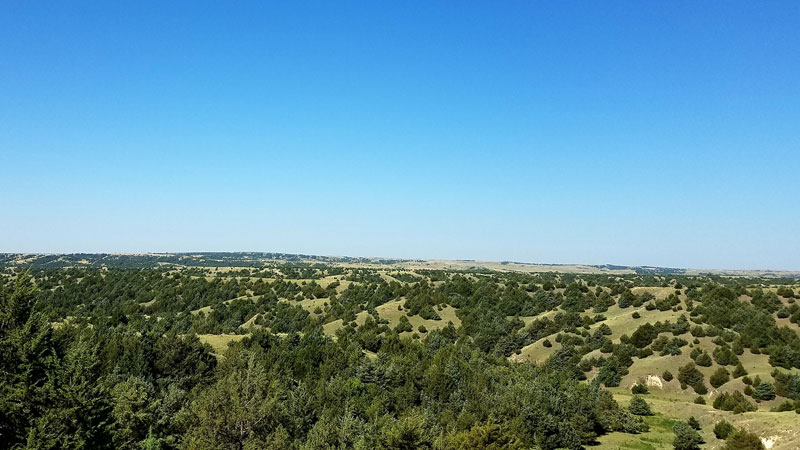 The invasive spread of eastern redcedar across Nebraska will continue as long as policy is mismatched with known science, University of Nebraska-Lincoln researchers have found. Without resolving the disconnect, grasslands will keep transitioning into cedar woodlands.