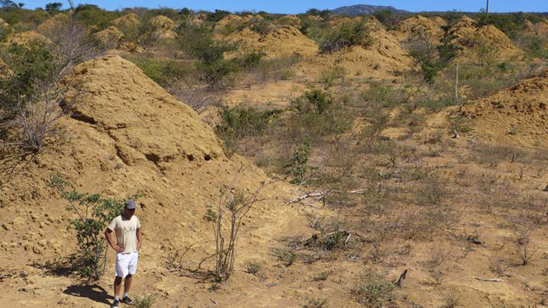 New research published this week in Current Biology shows that the oldest of the tested large, cone-shaped mounds dotting the surface of the Earth in northeastern Brazil are 4,000 years old. And they know that because of work Dr. Paul Hanson did to age-date the soil grains.
