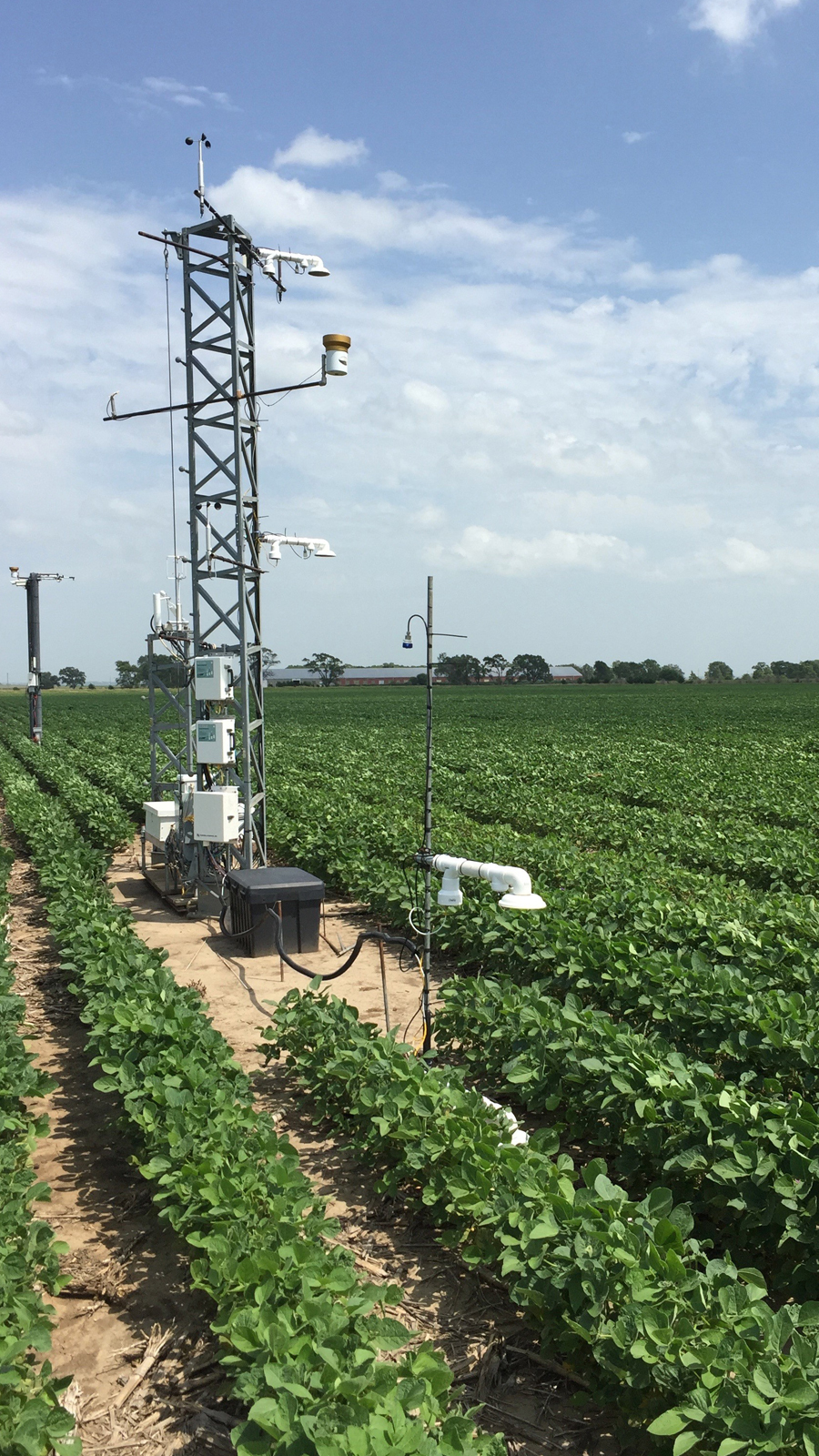 Tower eddy covariance and supporting environmental sensors