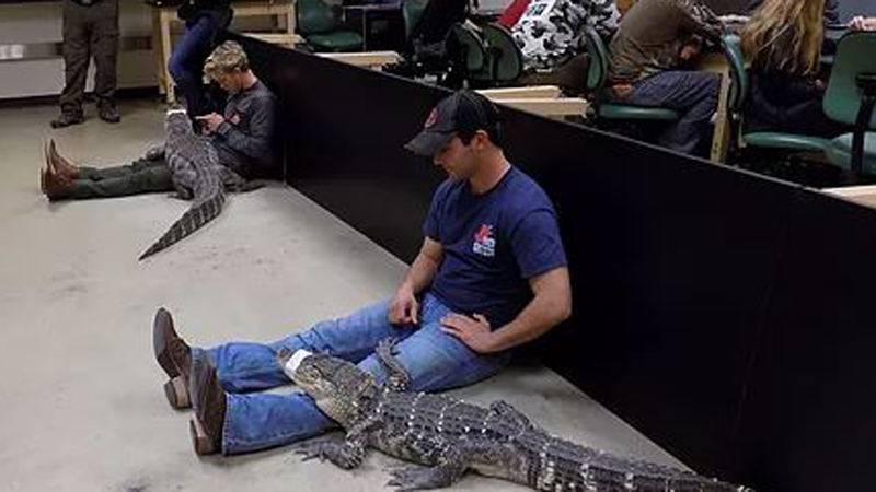 at play with alligators
