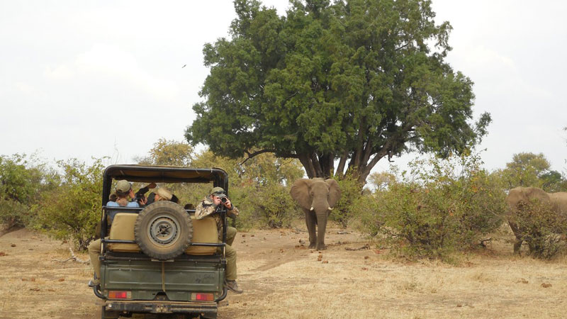 Elephant and Jeep