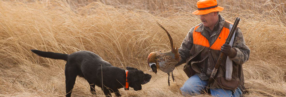 Pheasant Hunting with Dog