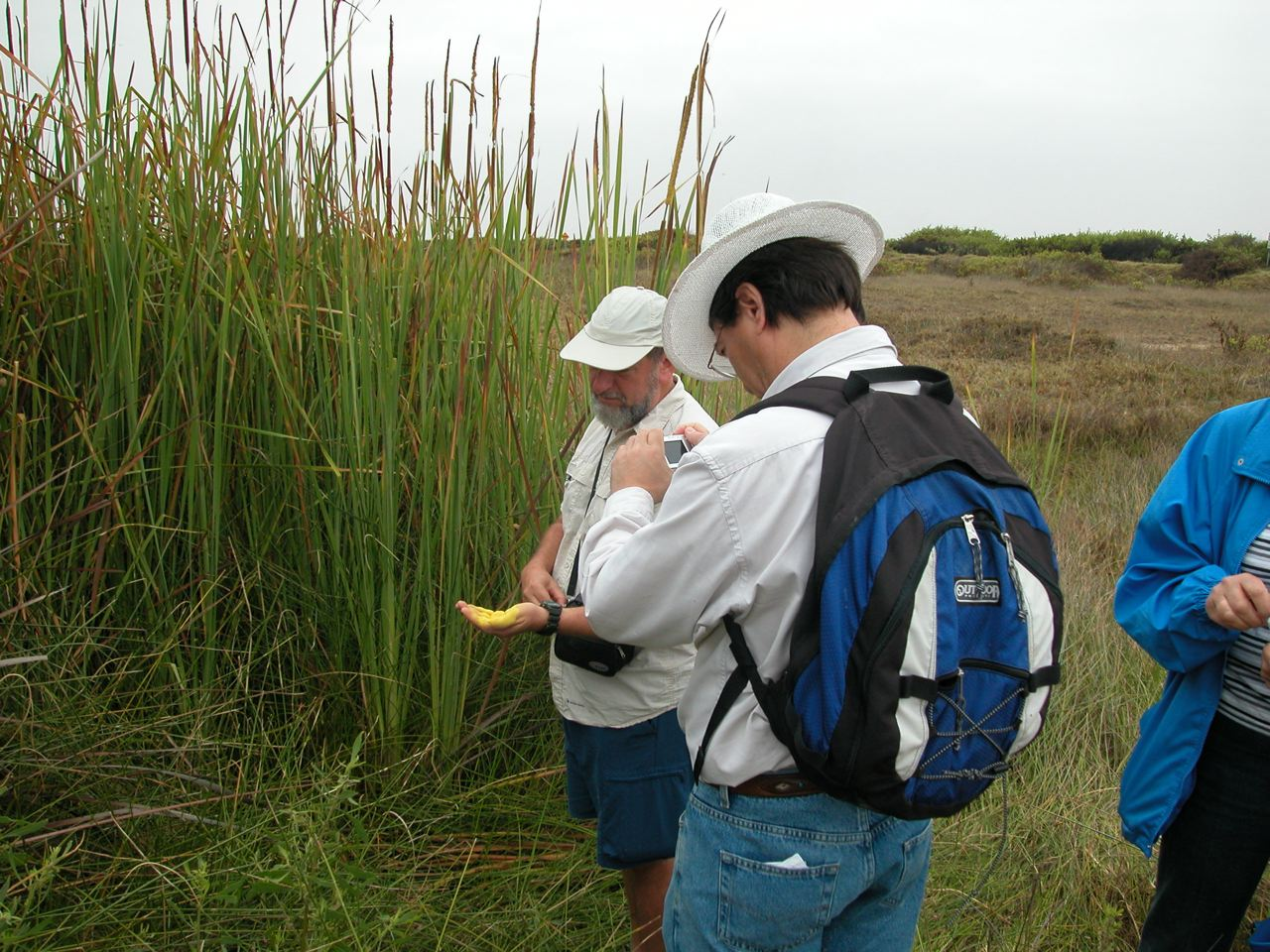 Bernardo Arriaza and Karl Reinhard exploring the pollen production of cattails in the Atacama Desert, Chile