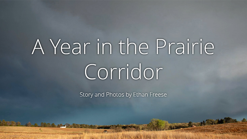 A Year in Prairie Corridor