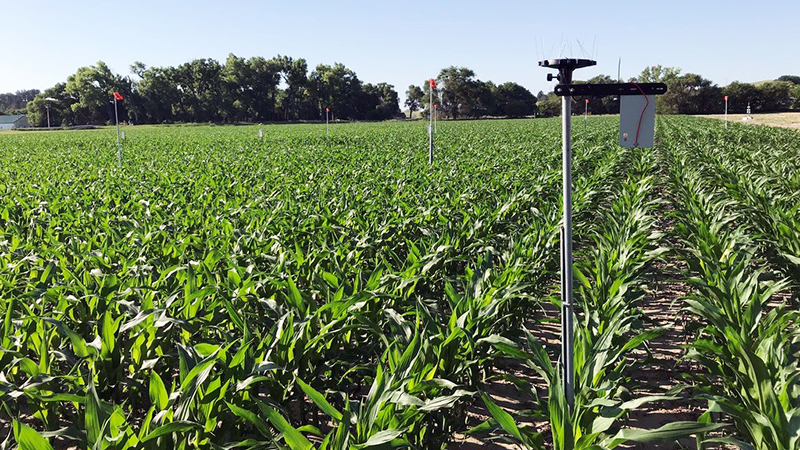 A new grant that brings together researchers from Nebraska, Illinois and Princeton aims to bridge the gap between data-collection, modeling and decision-making so crop producers can more easily decide whether to irrigate. The project could potentially save both financial and water resources
