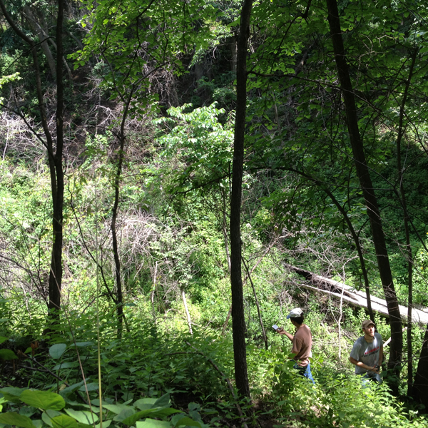 Graduate students Noelle Hart and Daniel Uden survey forest conditions at Indian Cave State Park.