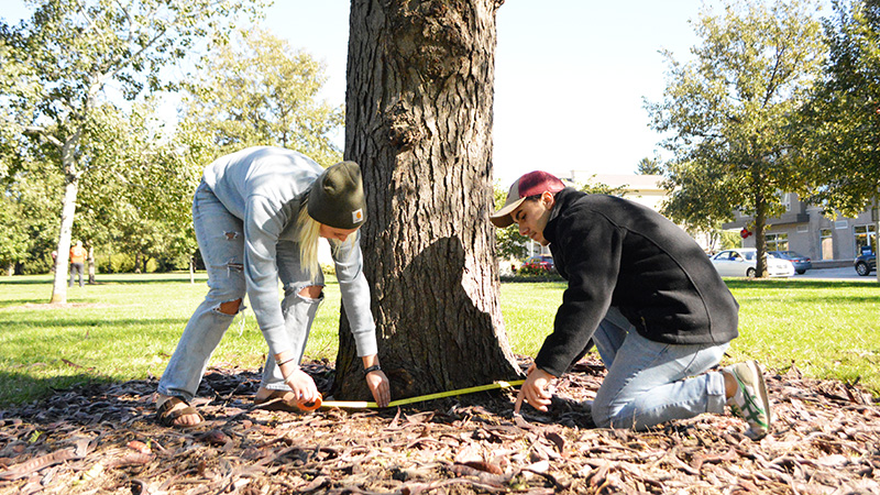 Tree Measuring